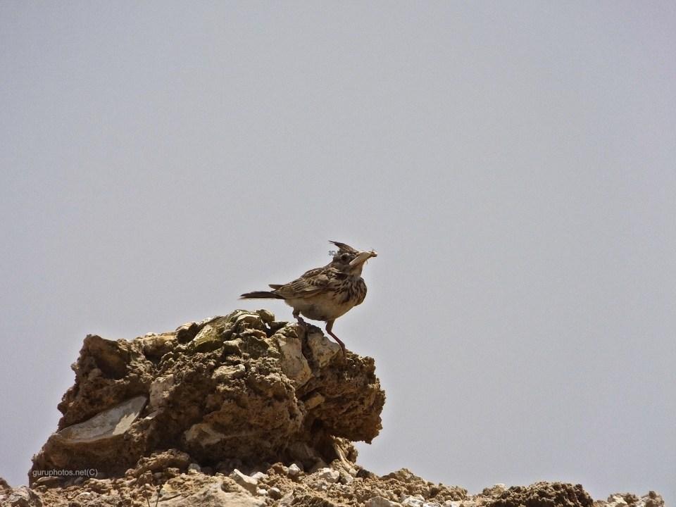 birdsDSCF3394