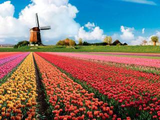 Куда съездить из Амстердама на 1 день — 14 лучших направлений