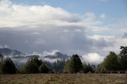 Myrtle Point Mist
