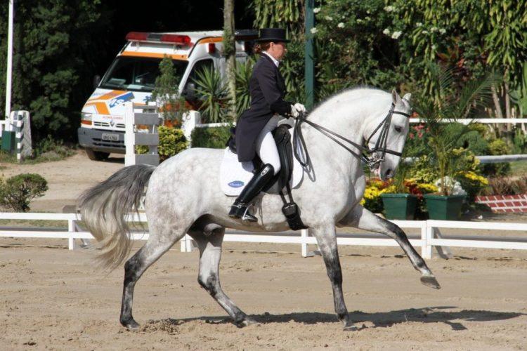 Lusitanians Horse