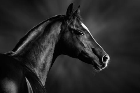 The horse's temperament