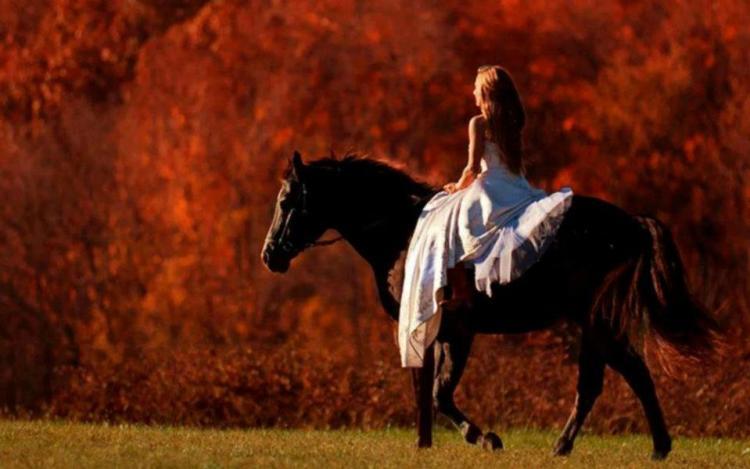 Quiet horse's temperament