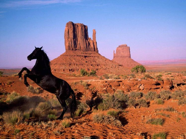 Mustang horse - Maroon horses of USA