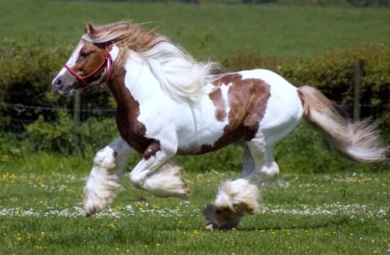 Dolor en caballo