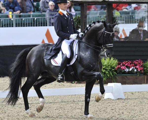 caballos ideales para salto 2