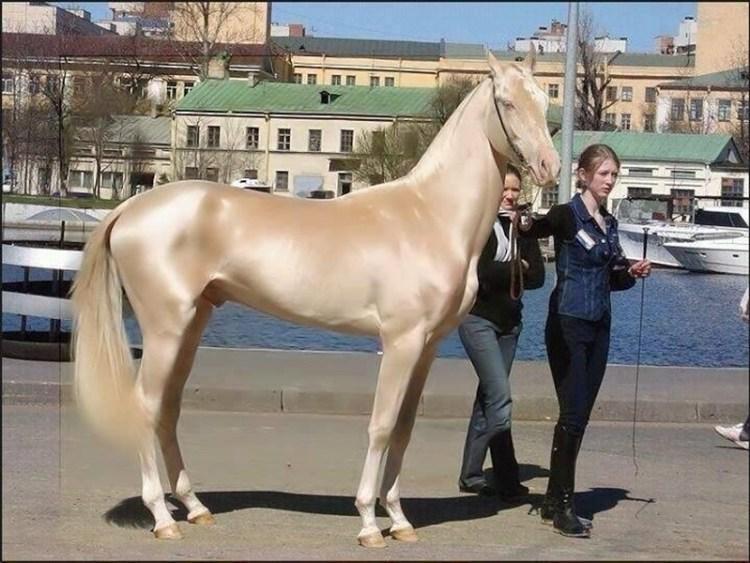 caballos dorados