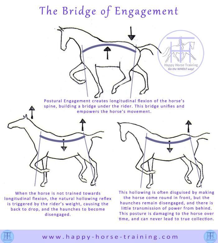 Equine Ethology