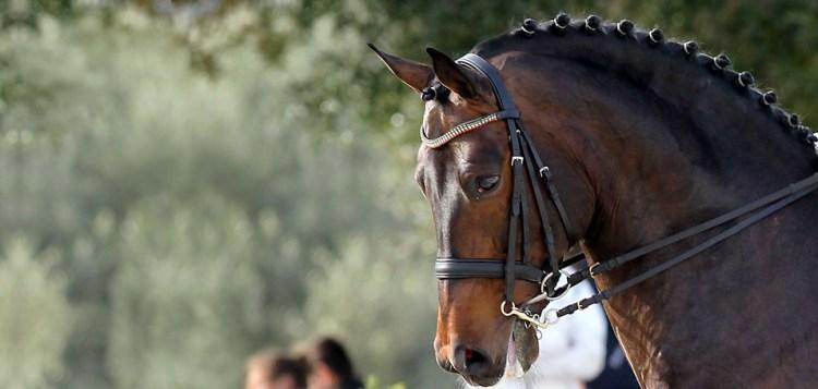 Gustavo Mirabal Castro - Beautiful Horse