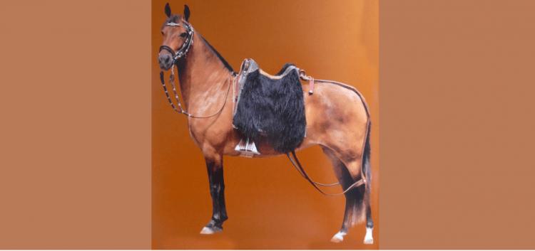 Peruvian Apero or Harness