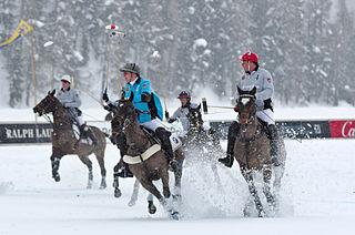 St. Moritz Horses