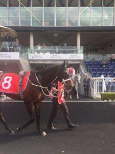 The mare Winx