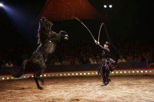 Yasmine Smart Horse Rearing (2004)