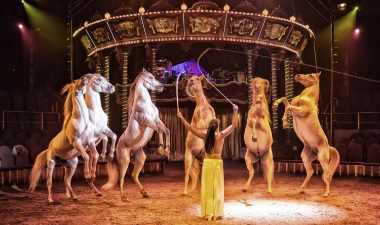 Horse in the circus