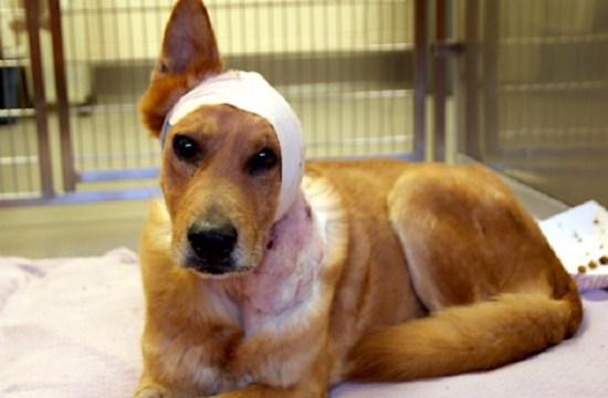 Example of Animal Cruelty