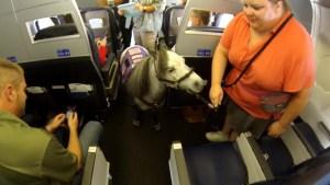 Flirty con su dueña en la cabina del avión