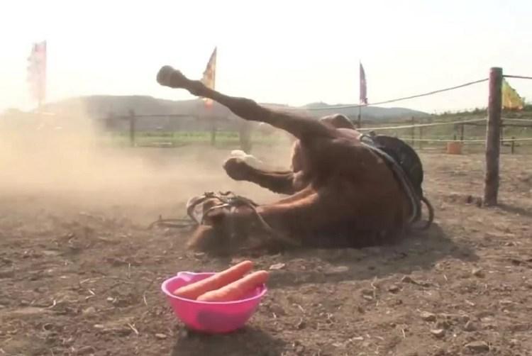 caballo se hace el muerto