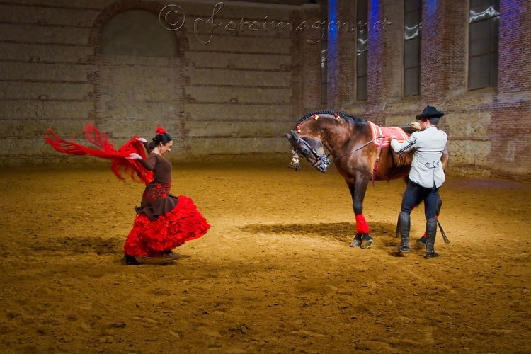 A horse show in the Spanish flamento