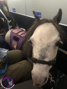 Flirty en el avión