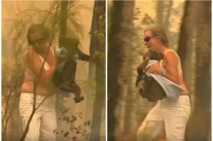 Toni Doherty - La Mujer salva a un koala de un incendio