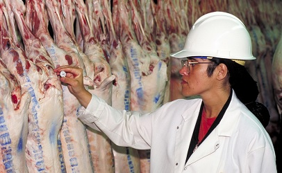 Veterinarian in food industry