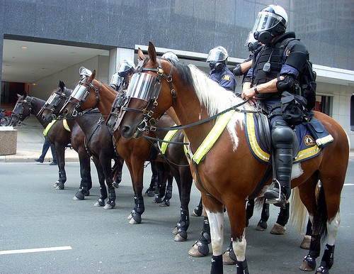 Horses in action - Retired Police Horses