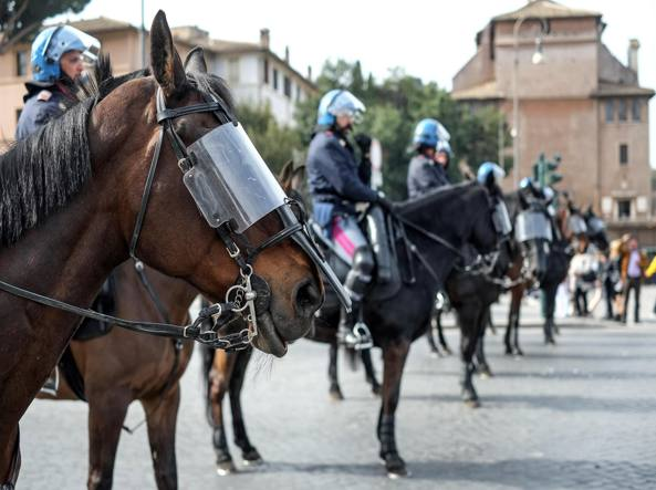 Police Retired Dogs and Horses