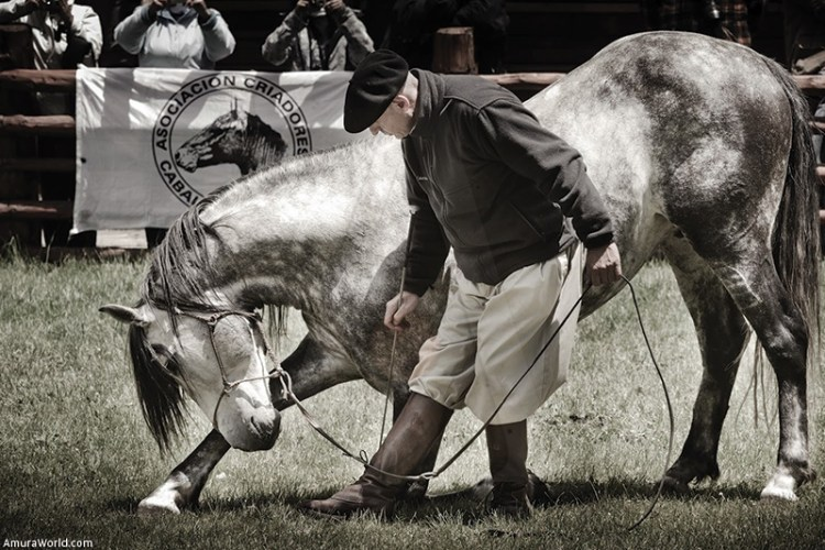 The Pure Blood Lusitano