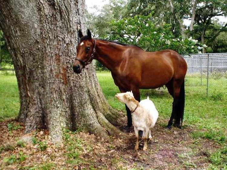 Upset horses and calming horses