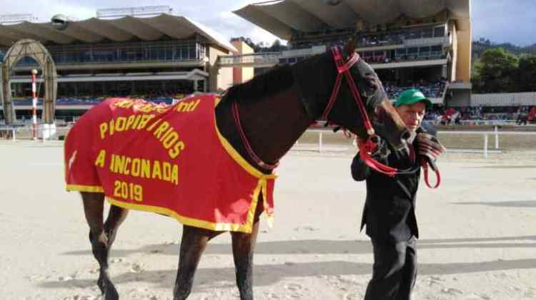 Venezuelan Gran Omero horse in the Classic Owners competition - Gustavo Mirabal