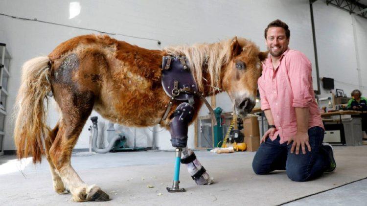 Derrick Campana fabrica prótesis para caballos y elefantes