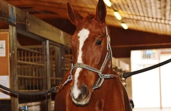 Horse care in coronavirus quarantine
