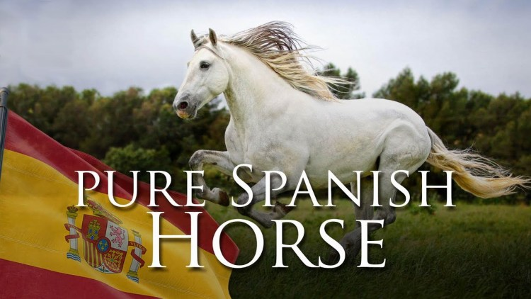 Pure Spanish Horse - Spain and Gustavo Mirabal