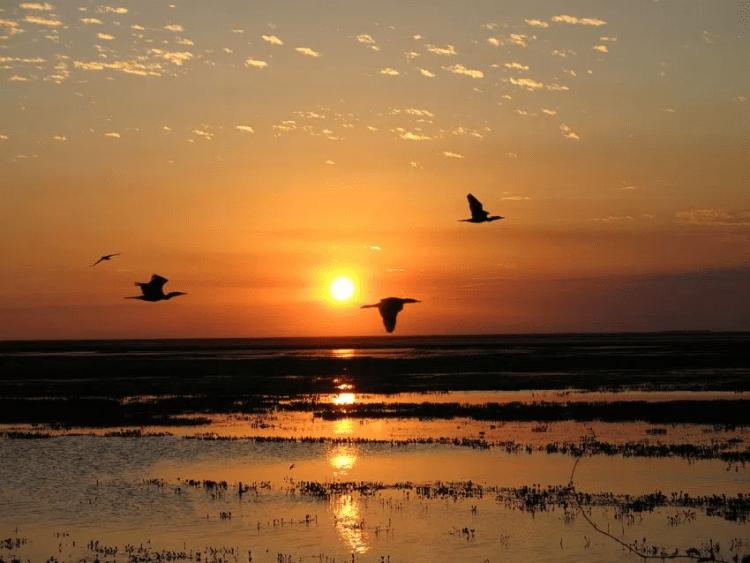 Sunset of the Venezuelan plain
