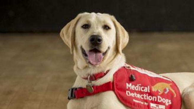 Dog training against coronavirus