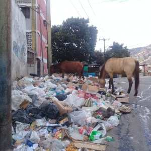Abandoned horses in Catia eating from the trash