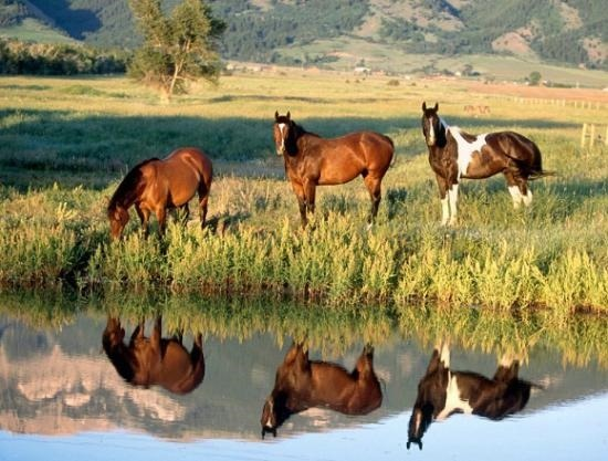Patagonian wild horses