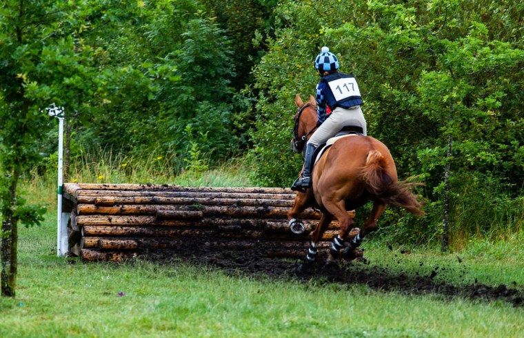 caballo de salto cross country