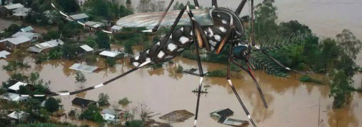 El cambio climático acelera la expansión de las comunidades de mosquitos