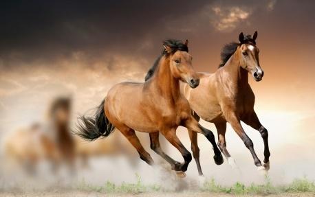 El caballo en la música