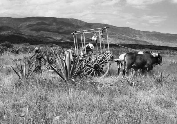 El origen del mezcal se remonta a tiempos ancestrales, en Mesoamérica, donde se consideraba una bebida sagrada