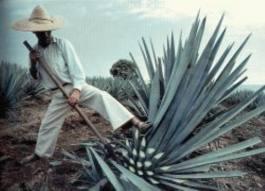 Conoce en video la bebida Nacional por Excelencia «Tequila» vía Consejo Regulador del Tequila