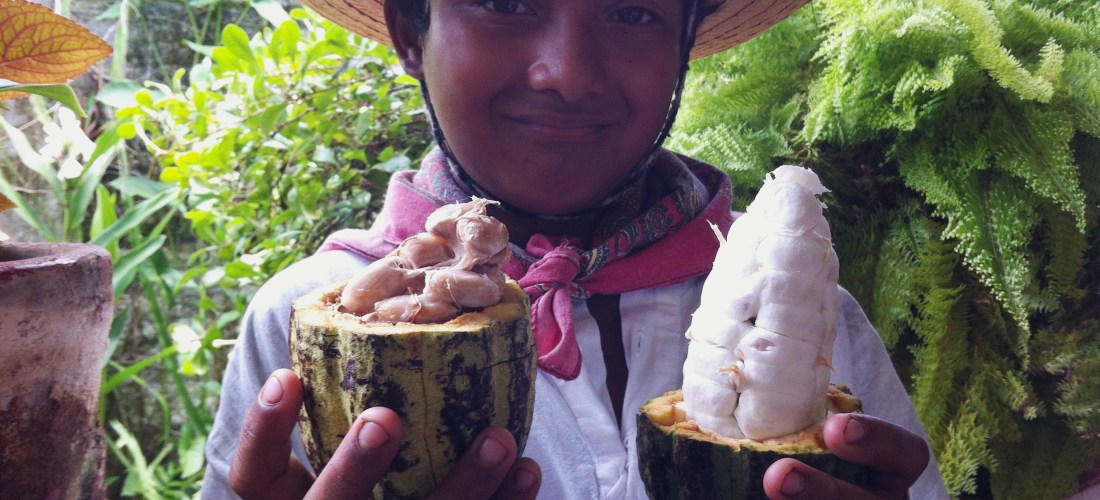 México Gourmet en video conoce «La Mazorca de Cacao» Hacienda Cacaotera Jesús María #MexicoGourmet