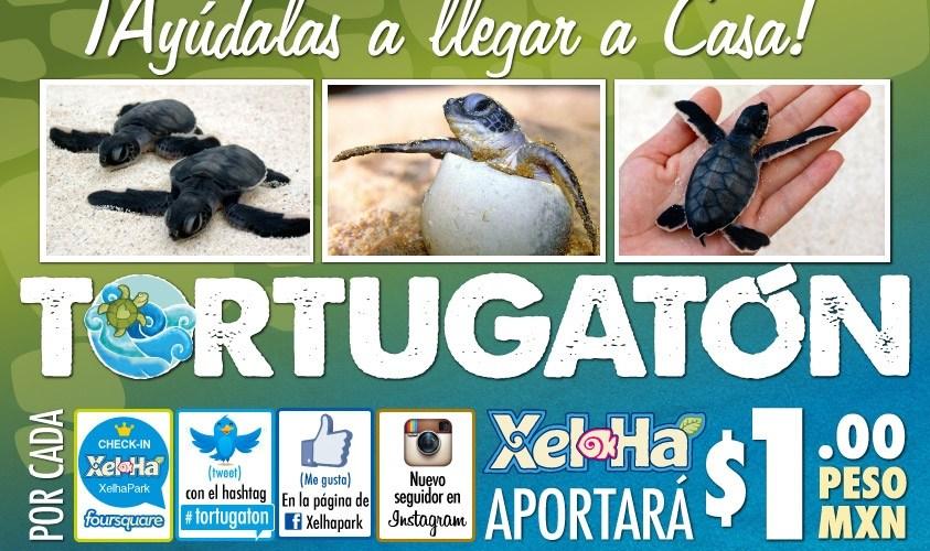 """El Milagro de La Tortuga Marina """"Tortugatón 2012"""" por cada tweet con hashtag #tortugaton Xel Ha aportará un peso apóyalas"""