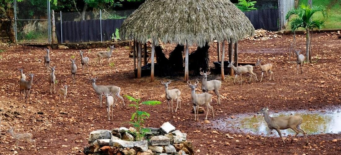 Conoce que son las UMAs Unidad de manejo para la conservación y aprovechamiento sustentable de la vida silvestre