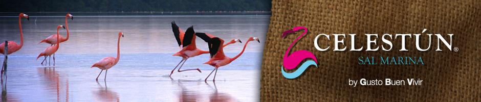En video todo sobre «El Flamenco Rosado» Celestún Yucatán @SalCelestun