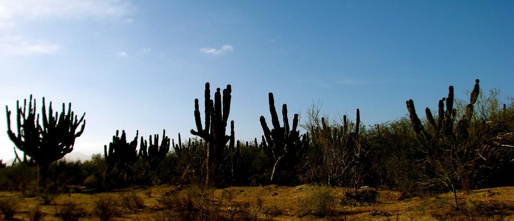 Visita Los Cabos en 4 días by @AmericanExpress  #AmericanExpressTravel #GustoBuenViajar
