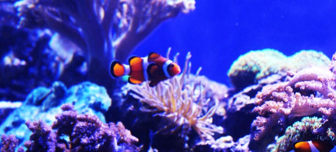 @AcuarioVeracruz un lugar ideal  para conocer la vida marina #GustoBuenViajar