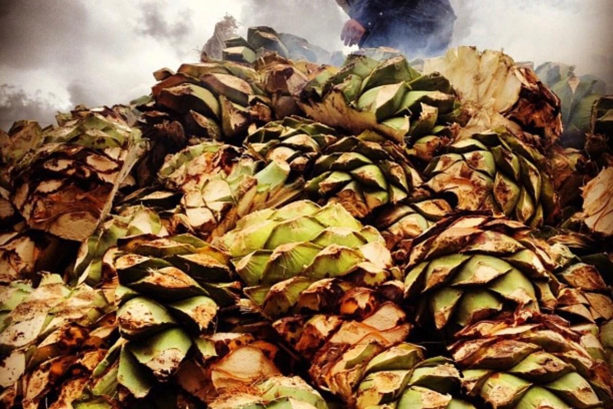 El Estado de Oaxaca provee a todo México y al mundo alrededor de de 60 mil litros de mezcal en lo que va del 2018