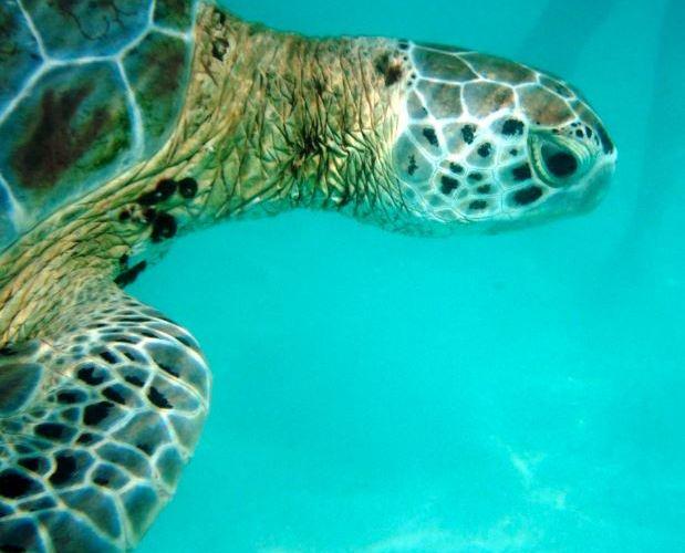 Iniciativa de Barceló Grand Maya Resort Para Protección de Tortugas