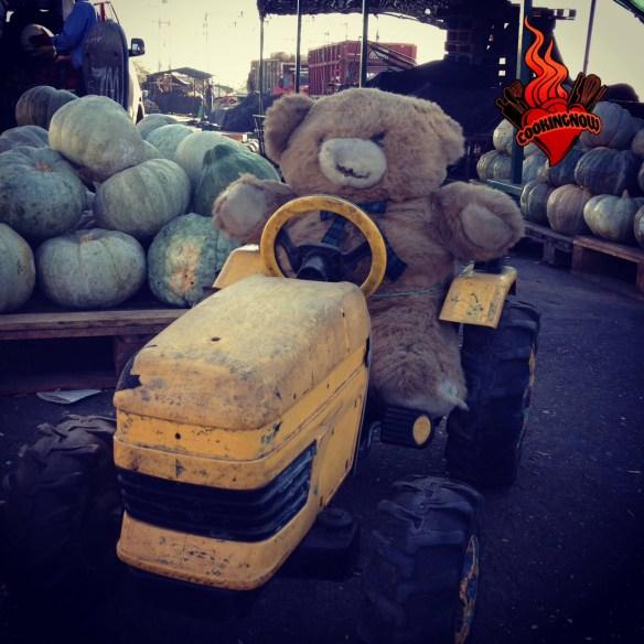 """""""Ted"""" chileno en el mercado de Lo Valledor ;)"""